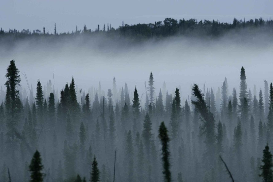 Climate change, global warming, forest, boreal forest, black spruce, black spruce forest, Canada, Canada forests