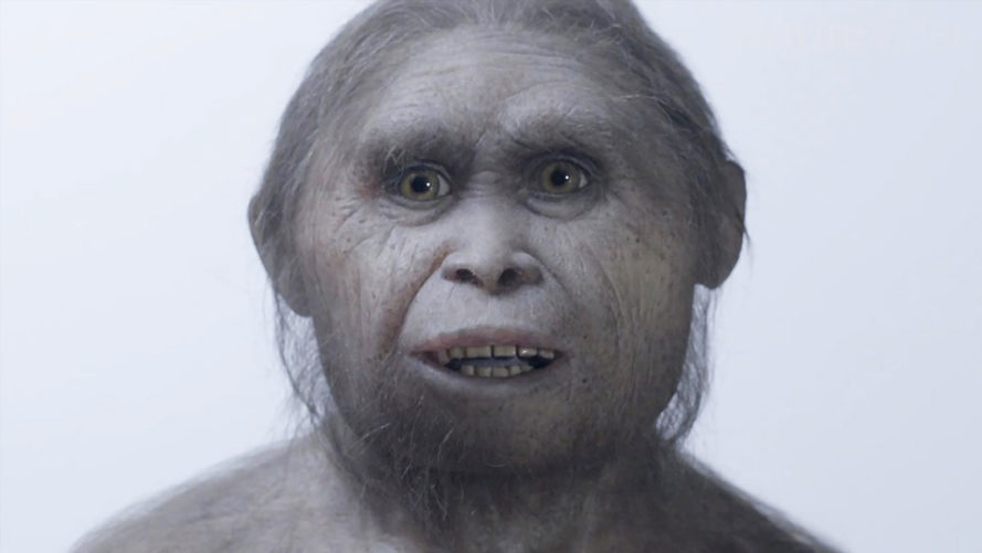 Hobbit, fossil, evolution, science, hominin, Flores, Indonesia, human relative, archaeology