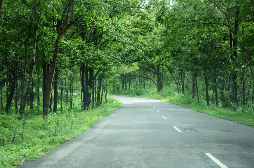 India, trees, forests, climate, saplings