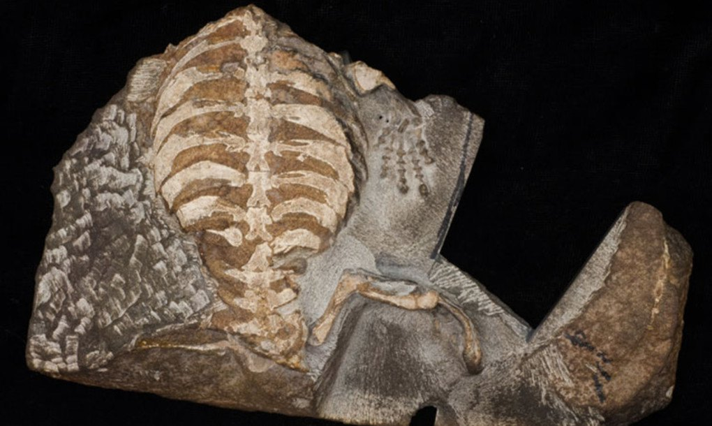 8 Year Old S Fossil Discovery Reveals How Turtles Got