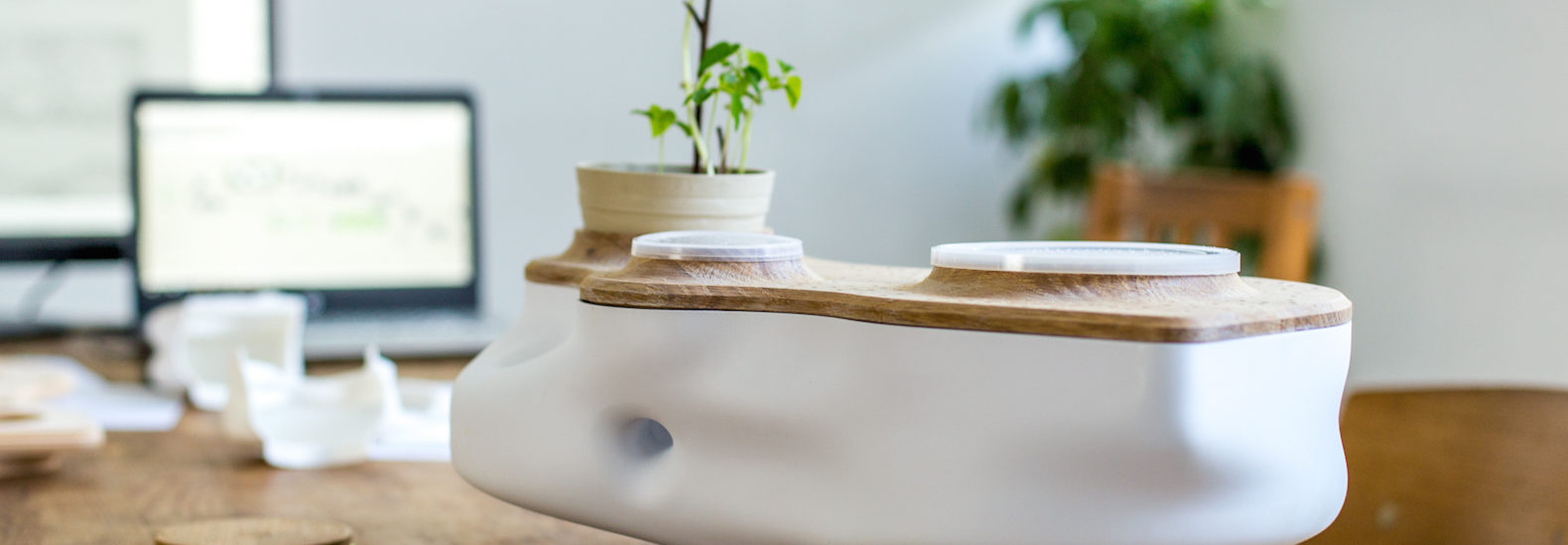 Lovely Beautiful, Odorless Tabletop Ecosystem Is Powered With Food Waste