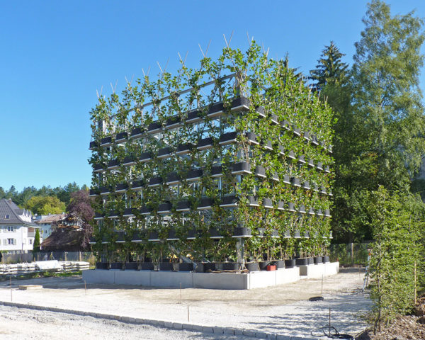 Plane-Tree-Cube by Baubotanik, Baubotanik living architecture, Baubotanik buildings, growing architecture with trees, tree shaped into buildings, tree shaping architecture, Baubotanik by Dr. Ferdinand Ludwig,