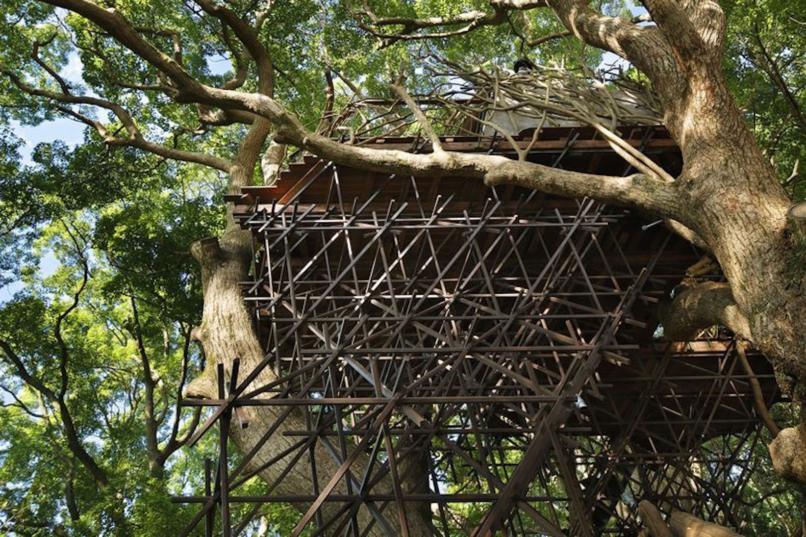 6 impressive structures built around living trees living trees inside out by takeshi hosaka inhabitat green design innovation architecture