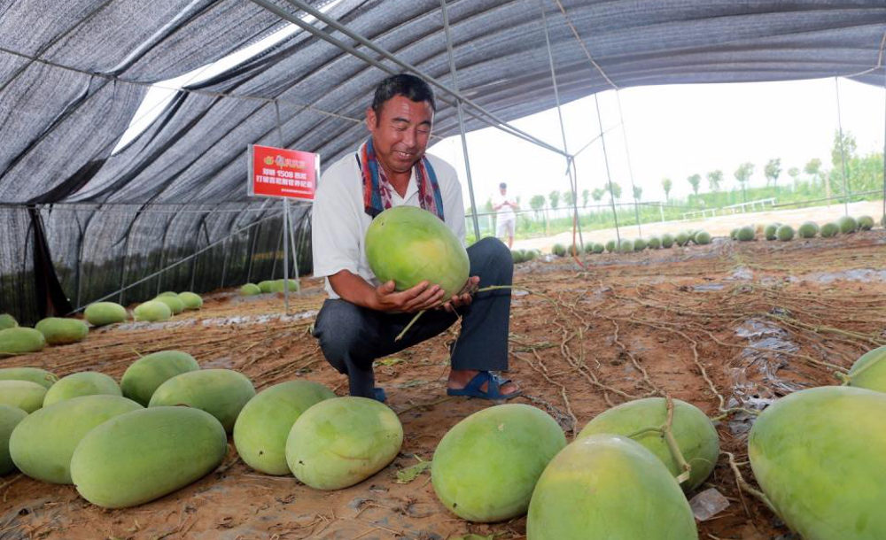 Chinese Watermelon Plant Yields 131 Fruit For Guinness