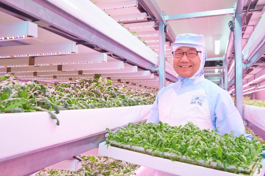 philips lighting, led lighting system, horticultural led system, lighting recipes, urban farm, vertical farm, indoor vertical farm, growing herbs indoors, growing lettuce indoors, growing food without daylight