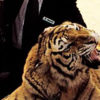 """Tigers punched for fun at horrifying """"sanctuaries"""" in China"""