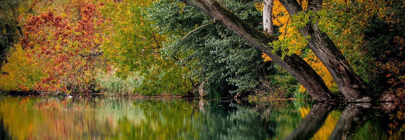 Warmer weather expected to ruin Fall colors | Inhabitat - Green ...