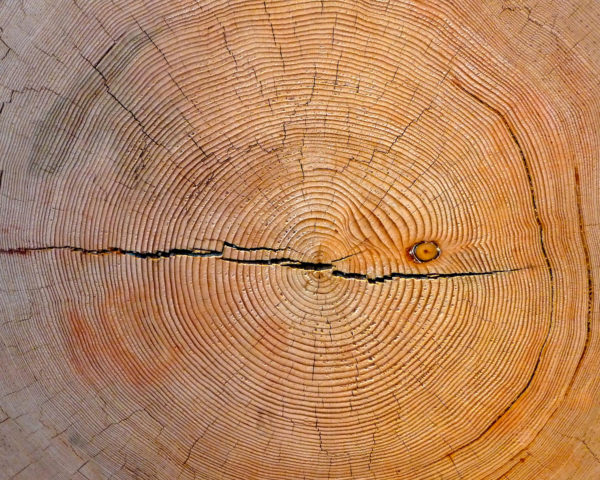 oxford university, radioactivity, tree rings, radiocarbon dating, dating ancient events, ancient history, old growth trees, radioactive time markers in lumber