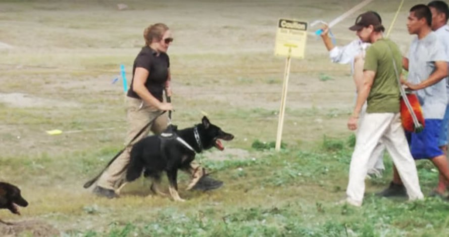 Security guards attack native protestors with dogs at Standing Rock Reservation