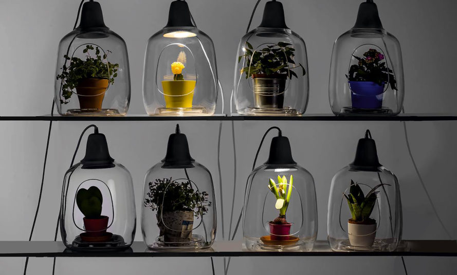 Lightovo, Milo, Milo by Lightovo, Milo Baby, Milo Baby by Lightovo, planter lamp, planter, plants, plant, nature, flowers, flower, succulents, succulent, herbs, herb, LED, LED light, sunlight, sunshine, product design