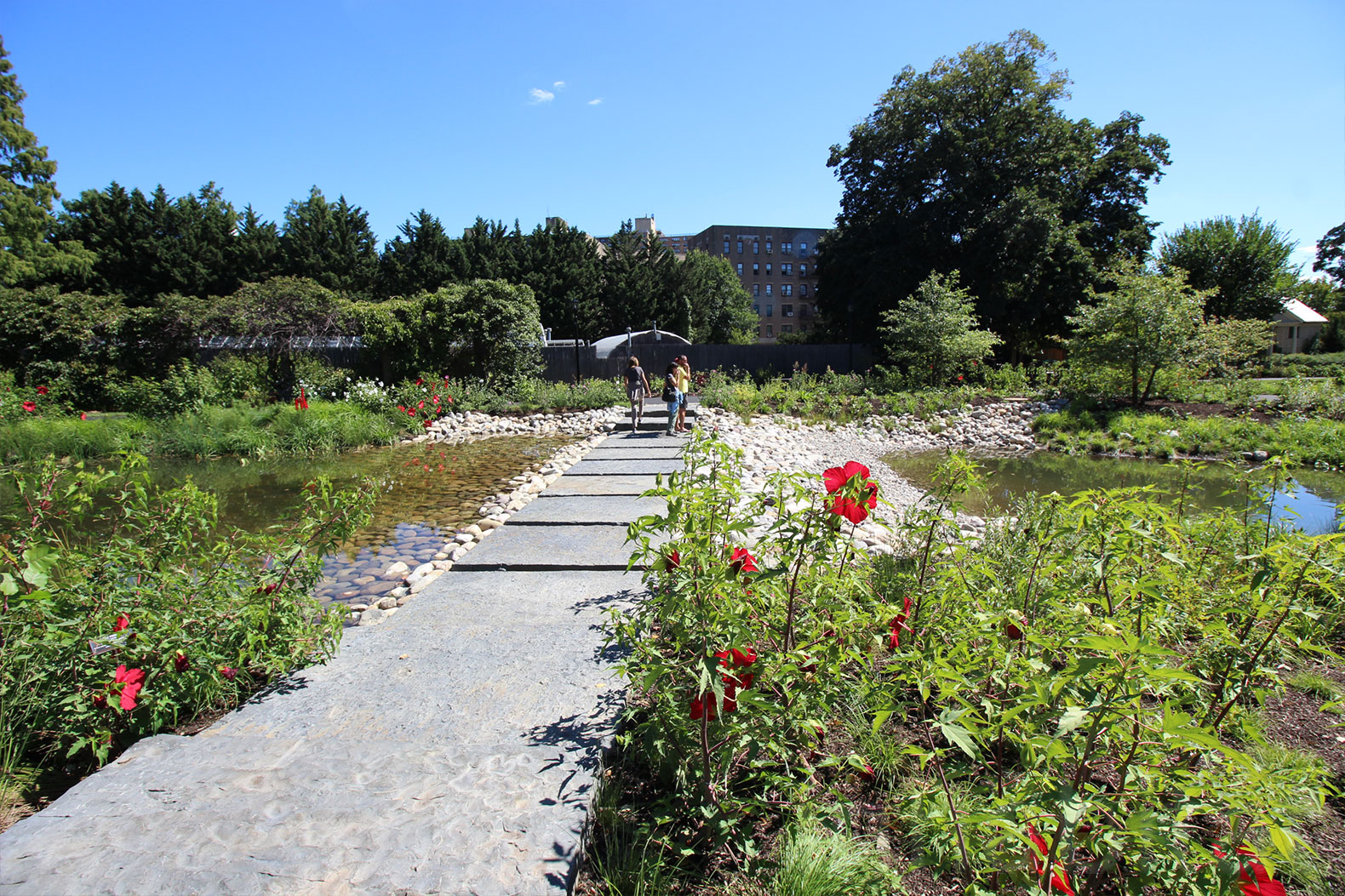 Shelby white and leon levy water garden opens at brooklyn for Botanical garden design