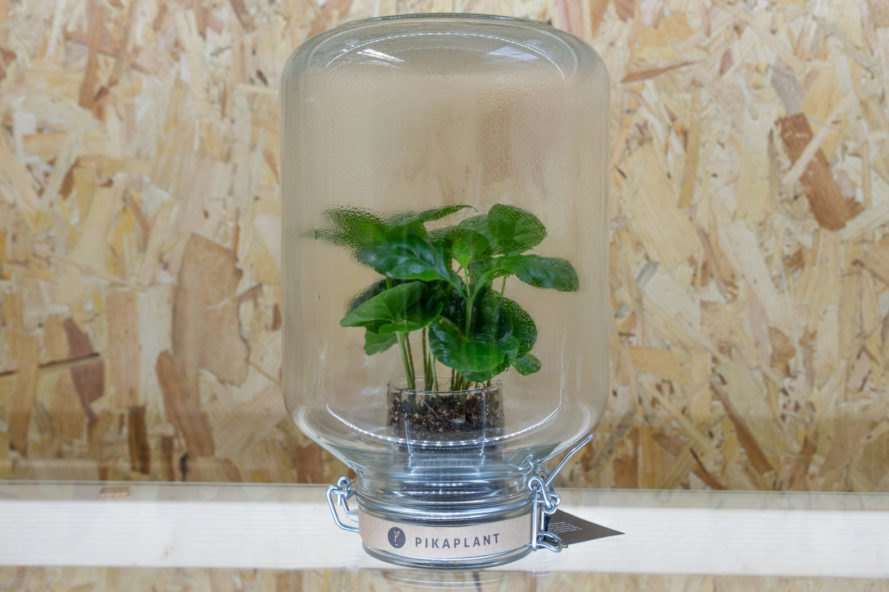 These Maintenance Free Self Watering Plants Use Biomimicry To