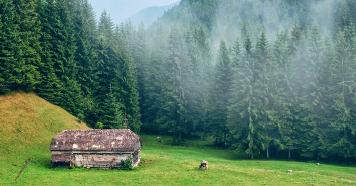 Romania races to save some of the last untouched forests in Europe