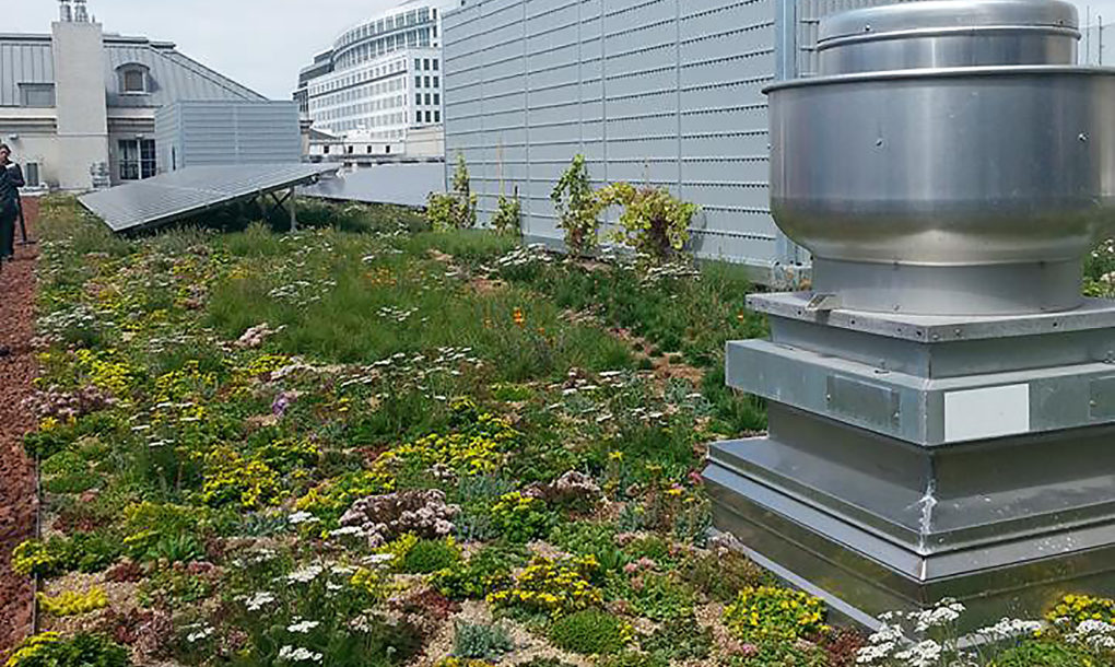 San Francisco May Be First Us City To Require Green Roofs