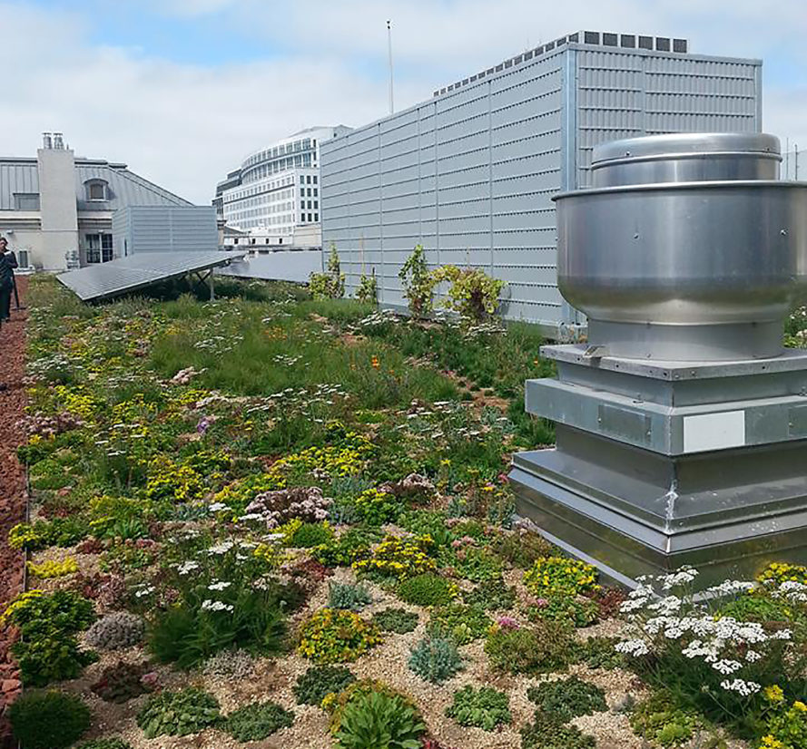 San Francisco, Green Roofs For Healthy Cities, GRHC, Scott Weiner, Green  Roof