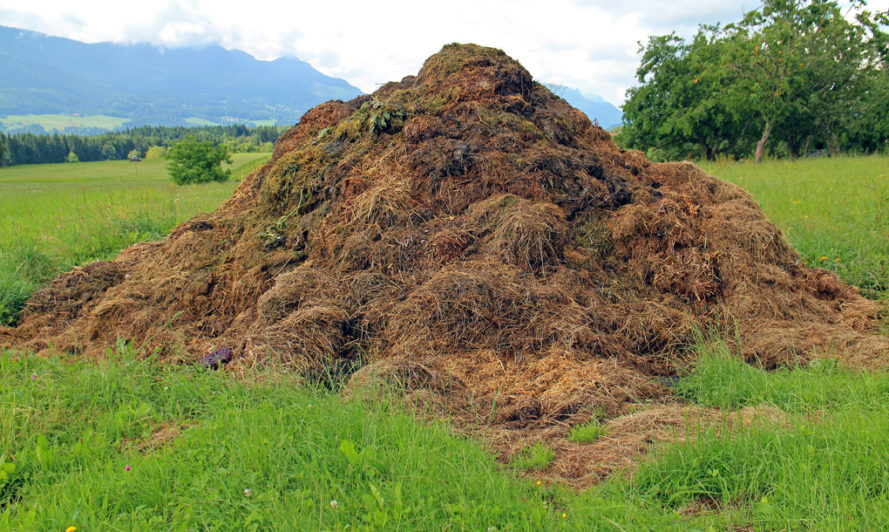 Manure, horse manure, cow manure, farming, fertilizer, composting, Bill mcdonough, urban farming, agriculture, cradle to cradle, agro-urbanism, design, urban agriculture, farming,