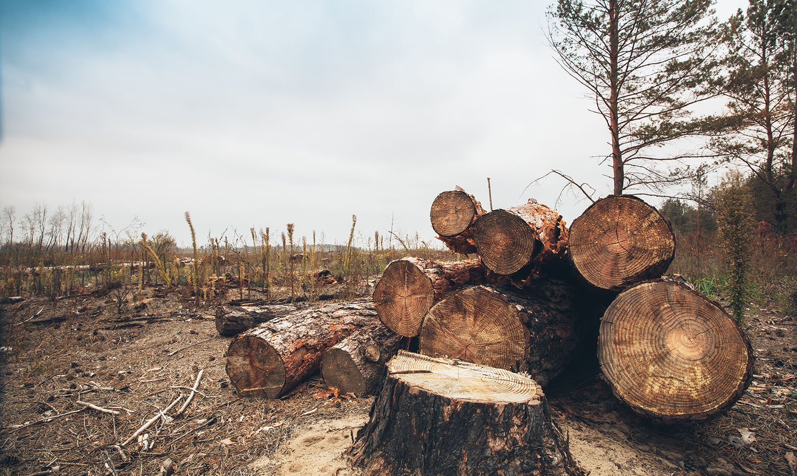depletion of forests ecological imbalance In this lesson, you will learn the definition of ecological imbalance and explore some examples of ecosystems that have shifted to a state of imbalance test your new knowledge at the end with a quiz.