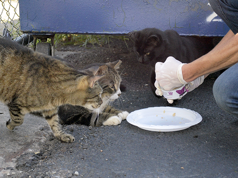 Feral Cats Work As Exterminators At Nyc Convention Center
