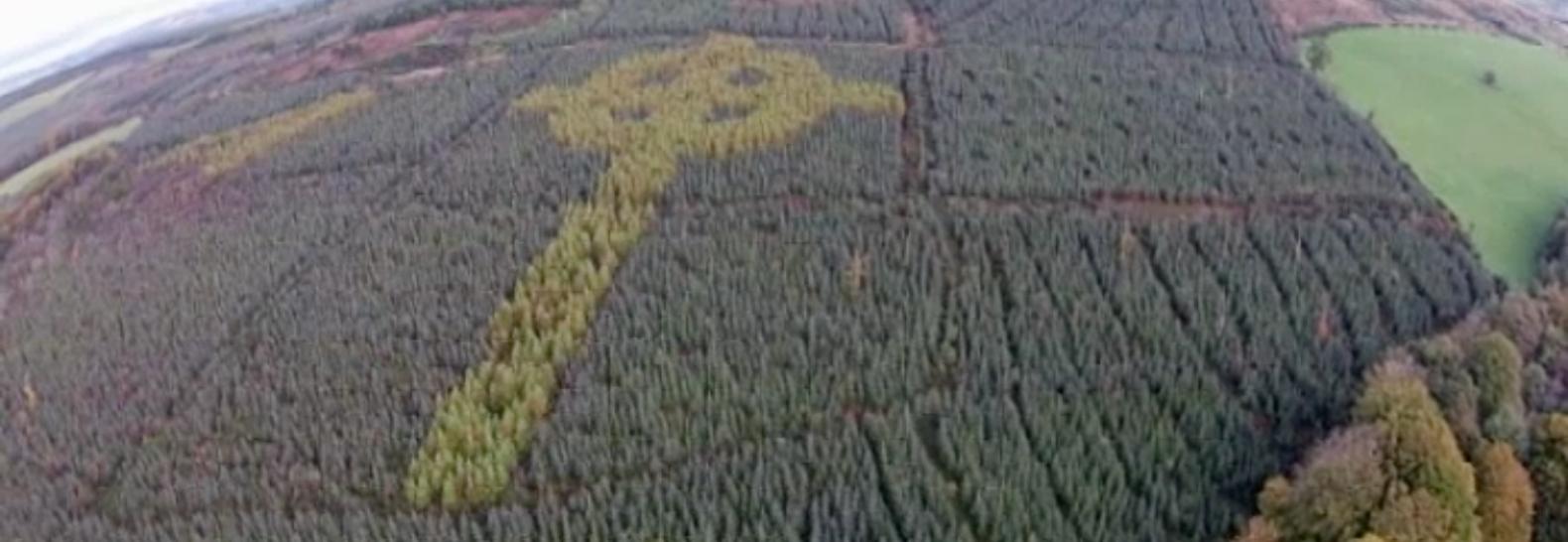 A massive Celtic cross made out of thousands of trees has secretly sprouted up in an Irish forest