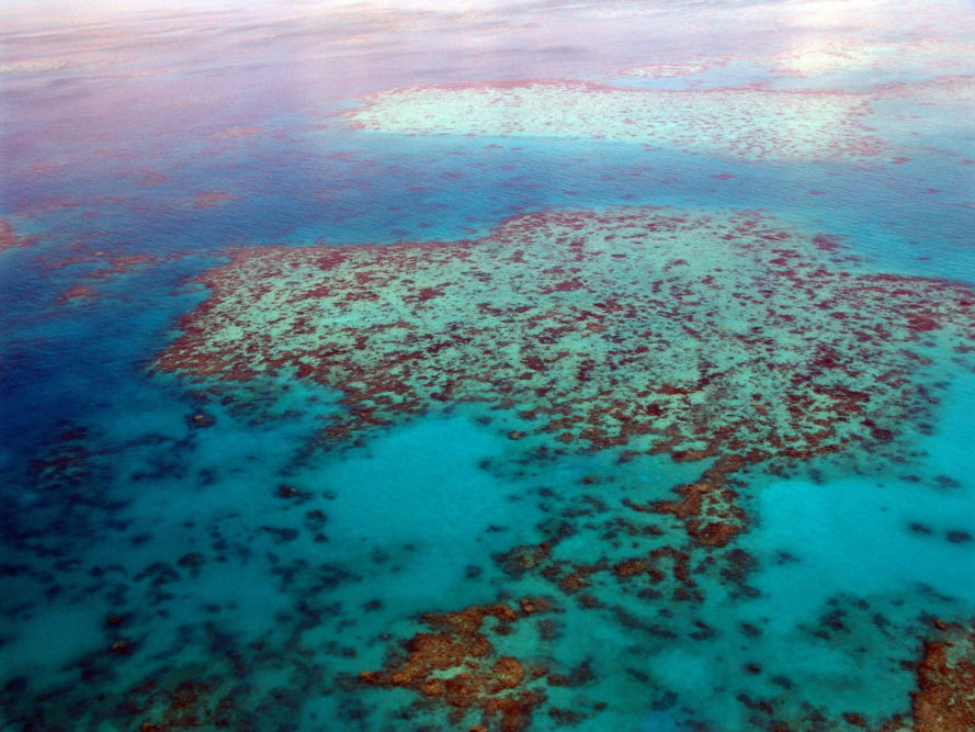 great barrier reef, coral death, great barrier coral death, coral bleaching, great barrier bleaching, ARC Centre of Excellence for Coral Reef Studies, James Cook University, australian reef, climate change, global warming effects, coral reef bleaching