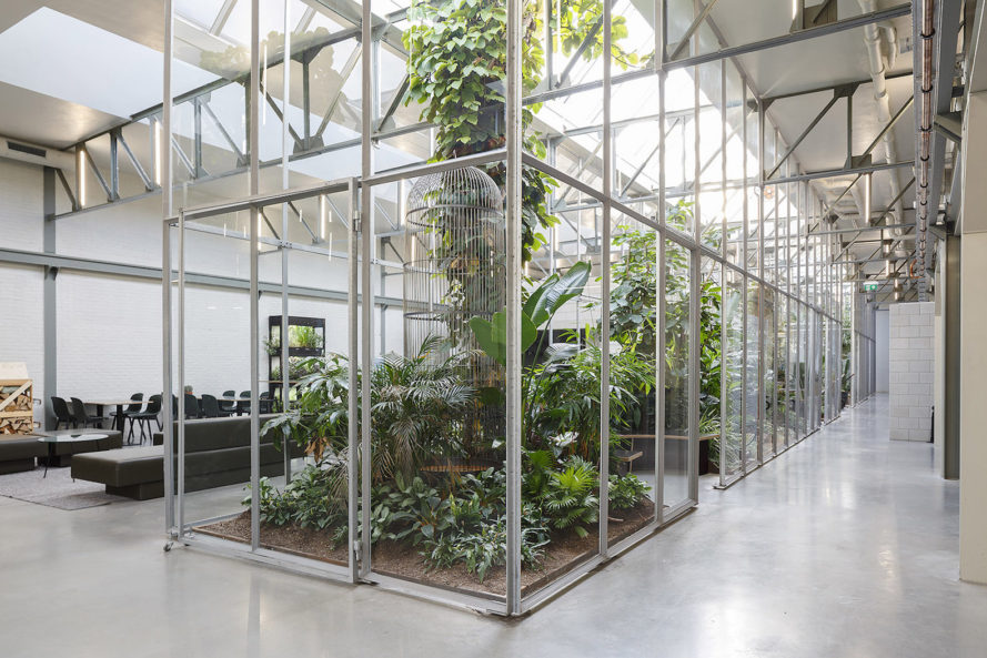Joolz by Space Encounters, renovated industrial warehouse into office, warehouse converted into office, nature-filled office, Joolz headquarters, Joolz headquarters in Amsterdam, renovated architecture in Amsterdam