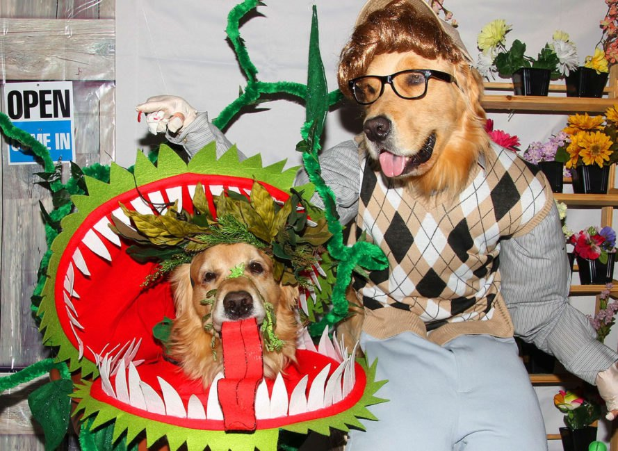 Little Shop of Horrors Dog Costume, halloween, halloween costumes, halloween pet costumes, pet costumes, dress up pet halloween, turkey pet costume, superhero dog costume, halloween dog costumes, chia pet costume, doggie bag costume, skydiver dog costume, stars wars at at dog costume, zero the dog costume