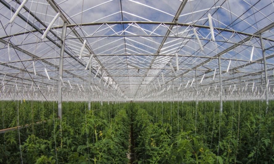 sundrop farms, greenhouse, hydroponics, solar energy, solar power, sustainable farm, sustainable farming, renewable energy, renewable farming, sustainable agriculture