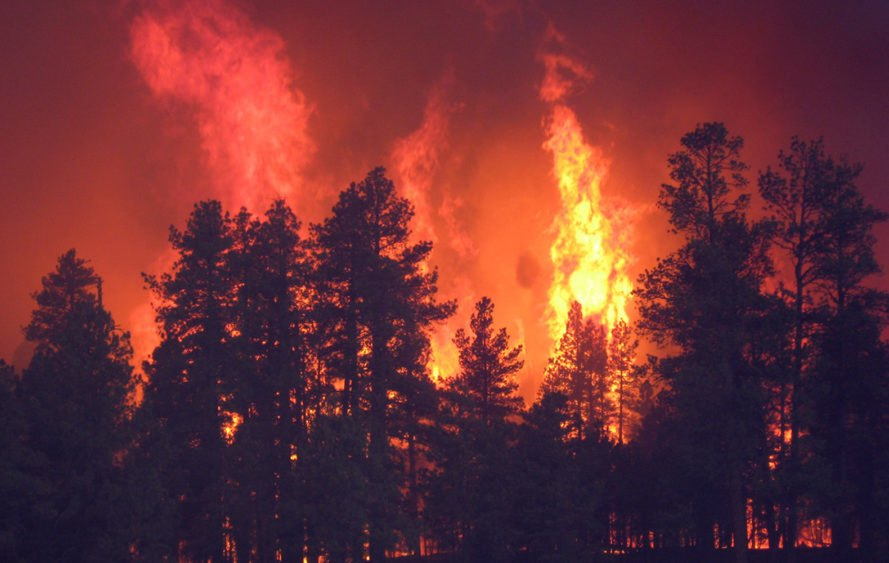 forest fires, western us, climate change, natural disasters, columbia university, research study, global warming, global temperatures, nature, forests, trees