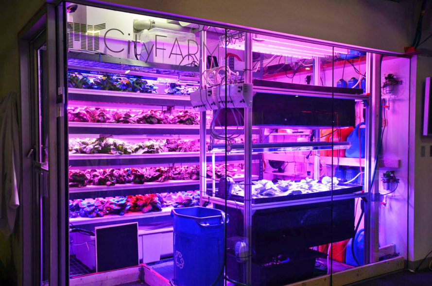 target, indoor farm, vertical farm, indoor micro-farm, aquaponics, hydroponics, indoor garden, indoor produce, local produce, sustainable agriculture