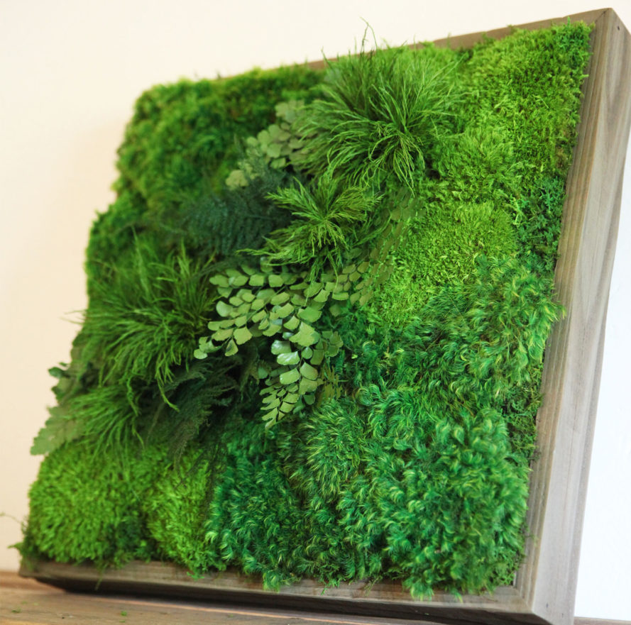 artisan moss wall art inhabitat green design innovation architecture green building. Black Bedroom Furniture Sets. Home Design Ideas