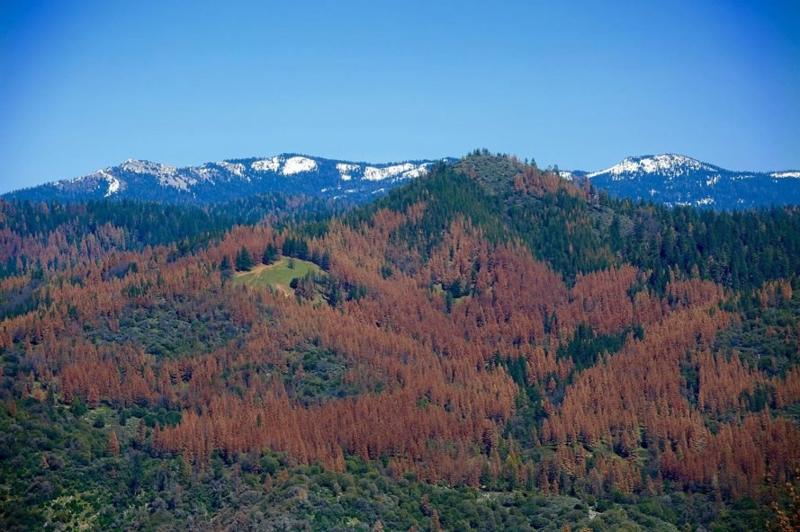 California, drought, California drought, U.S. Forest Service, USFS, Forest Service, forest, forests, tree, trees, tree mortality, trees dead, trees dying, drought