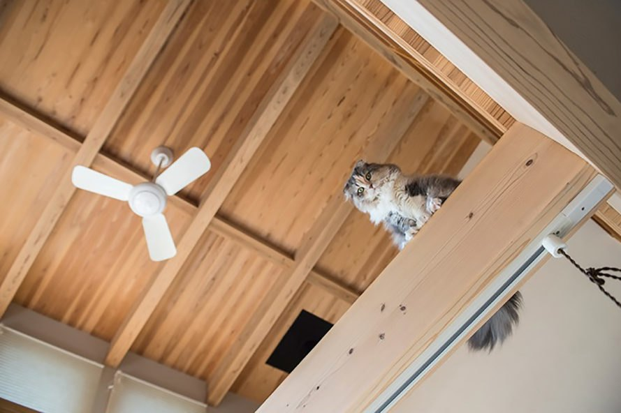 Fukuoka H House, Fukuoka H House by Sola Sekkei Koubou, Sola Sekkei Koubou, passive house, passive houses, passive home, passive homes, passive design, passive architecture, green design, sustainable design, green architecture, sustainable architecture, light, windows, cat, cats, cat walkways