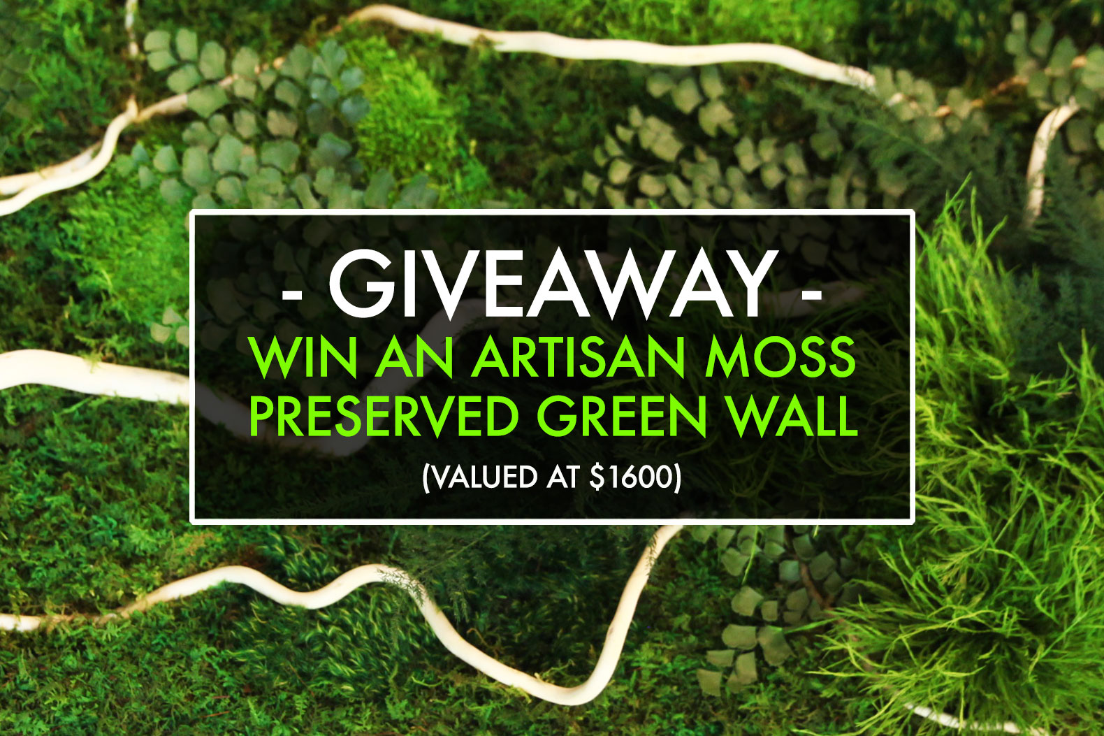 Were Giving Away An Artisan Moss Green Wall Made With Real And Lichens