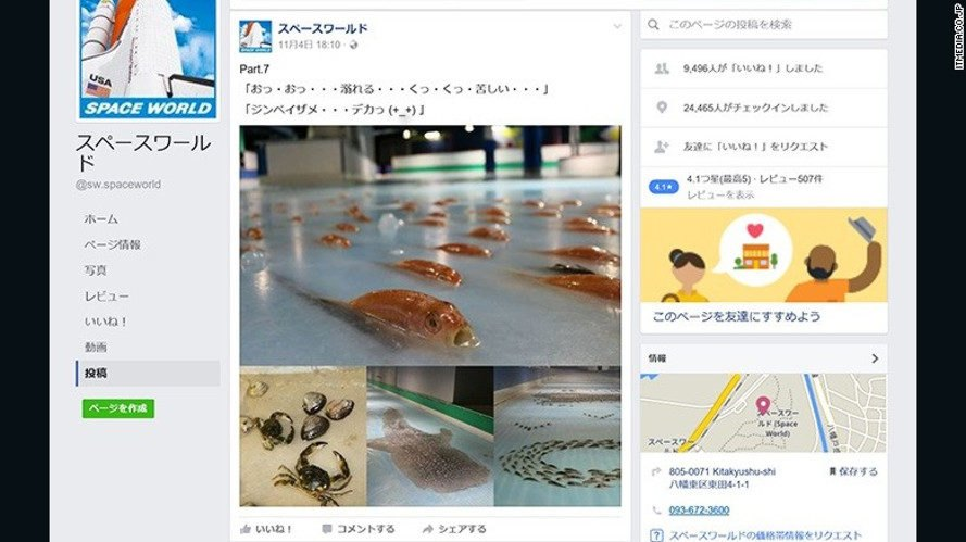 japan, space world, freezing port, japanese theme park, frozen fish in skating rink, skating rink attraction, ice skating, dead fish, social media protests