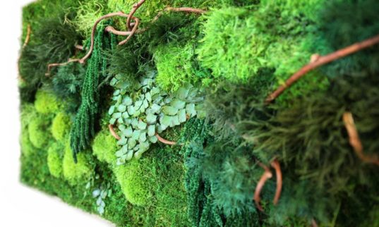 Artisan Moss 'plant paintings' are maintenance free