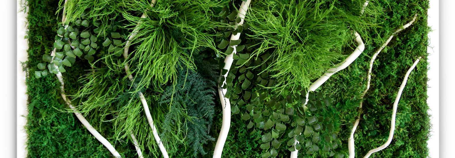 Artisan Moss Plant Paintings Are Maintenance Free Alternatives To Living Walls
