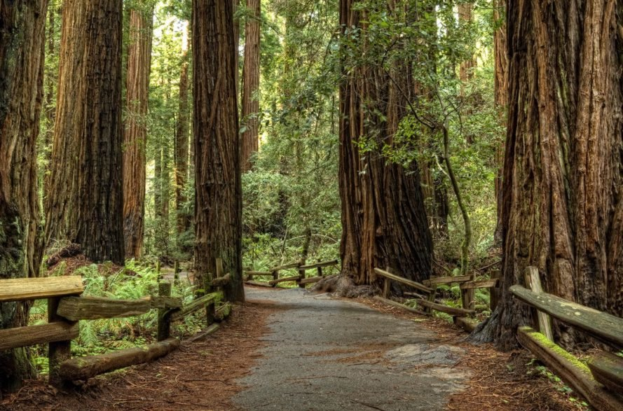 irish town plans to plant largest redwood grove, town of birr plants redwoods, largest redwood grove, coastal redwood, redwood endangered, lord rosse, birr, ireland