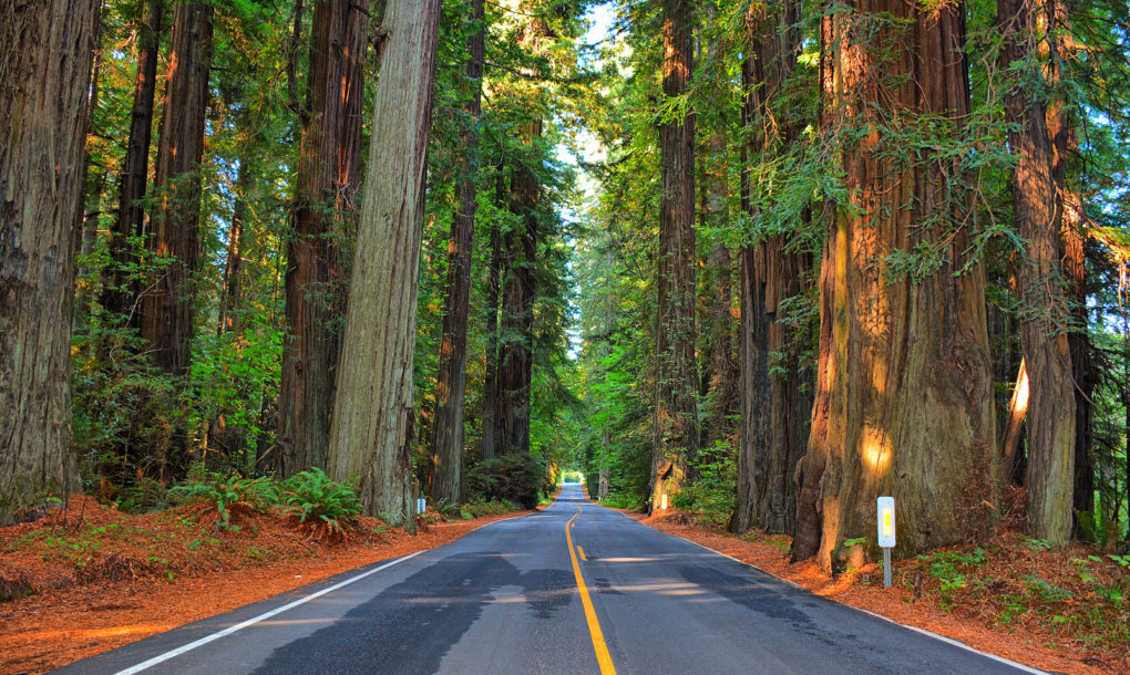 Irish Town Plans To Plant World S Largest Giant Redwood