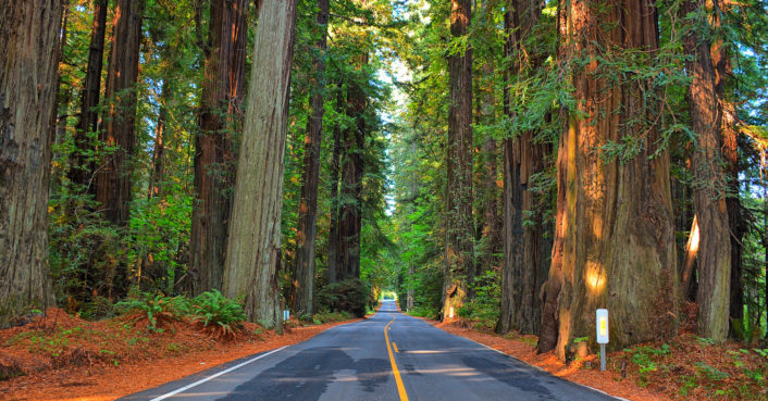 Irish Town Plans To Plant World S Largest Giant Redwood Grove