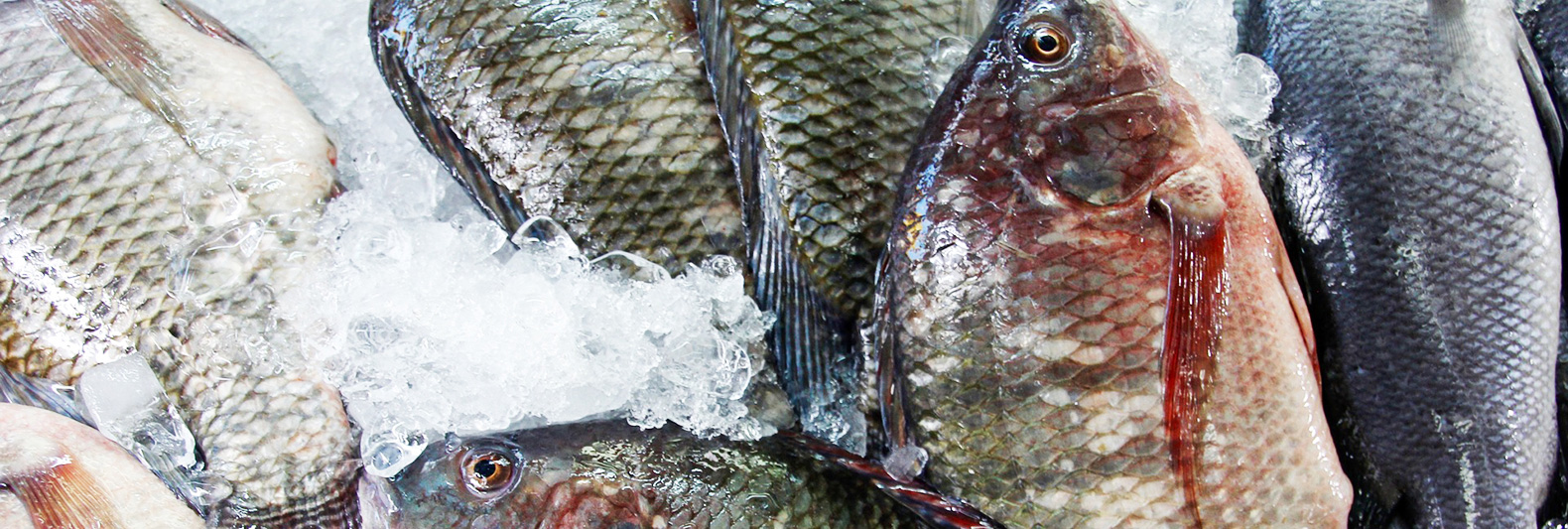 The world's fish are vanishing far faster than previously thought