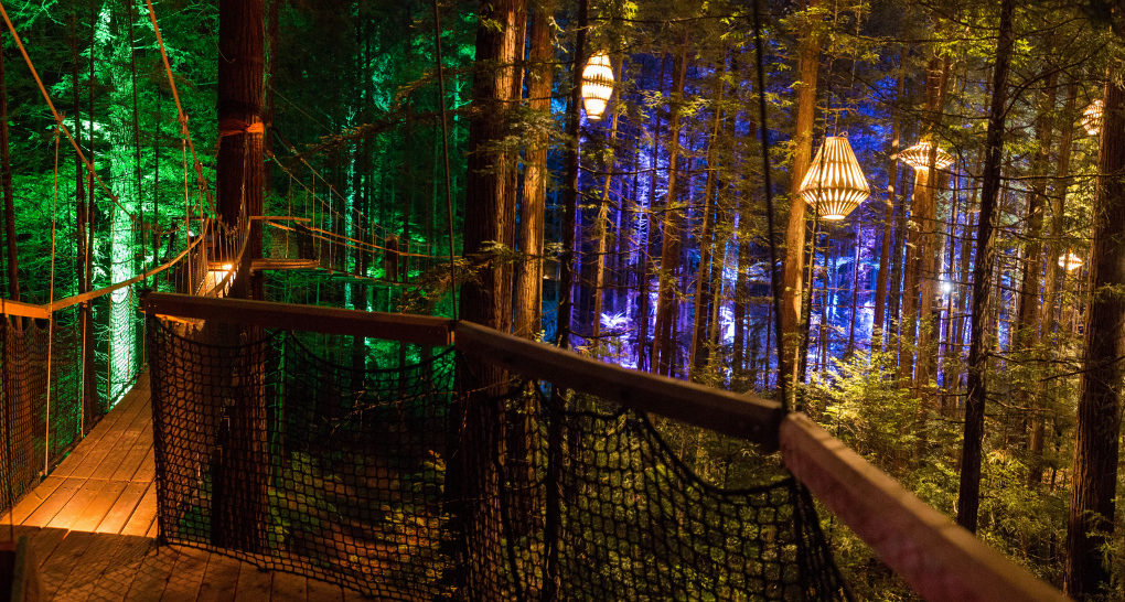 David Trubridge Lights Up A Magical Redwood Tree Walk In