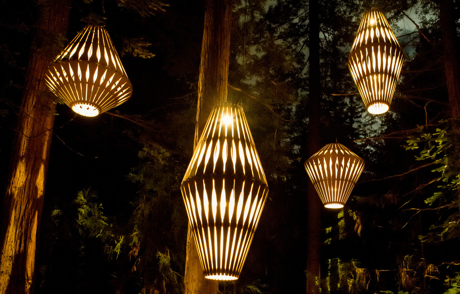 David Trubridge Lights Up A Magical Redwood Tree Walk In New Zealand