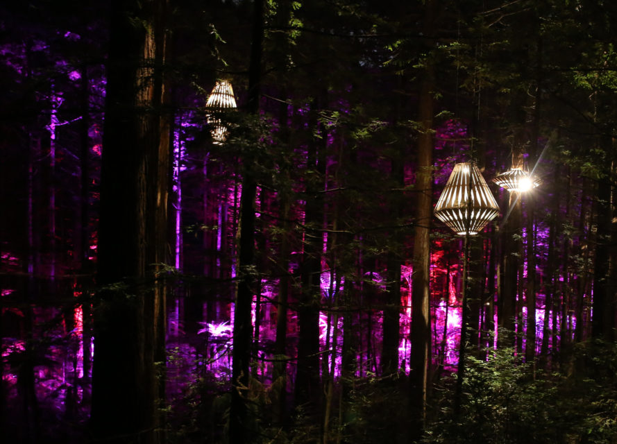 redwoods nightlights, redwoods treewalk, rotorua, new zealand treewalk, david trubridge, wooden lanterns, forest lanterns, treewalk lanterns, redwood forest, new zealand redwoods