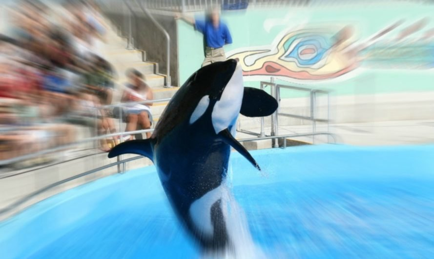 seaworld, seaworld abu dhabi, killer whales, PETA, animals sea world, United Arab Emirates, BlackFish, killer whales in captivity, seaworld orcas, marine life research and rehabilitation center,