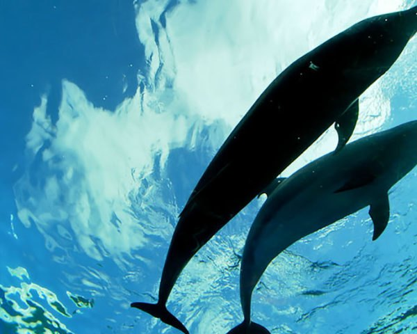 Dolphin, dolphin, DolphinBase, animal, animals, Taiji, Japan, Taiji hunt, Taiji dolphin hunt, dolphin hunt, tourism, recreational facility