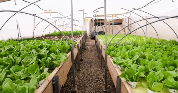 Incredible rooftop farm takes over Israel's oldest mall to grow