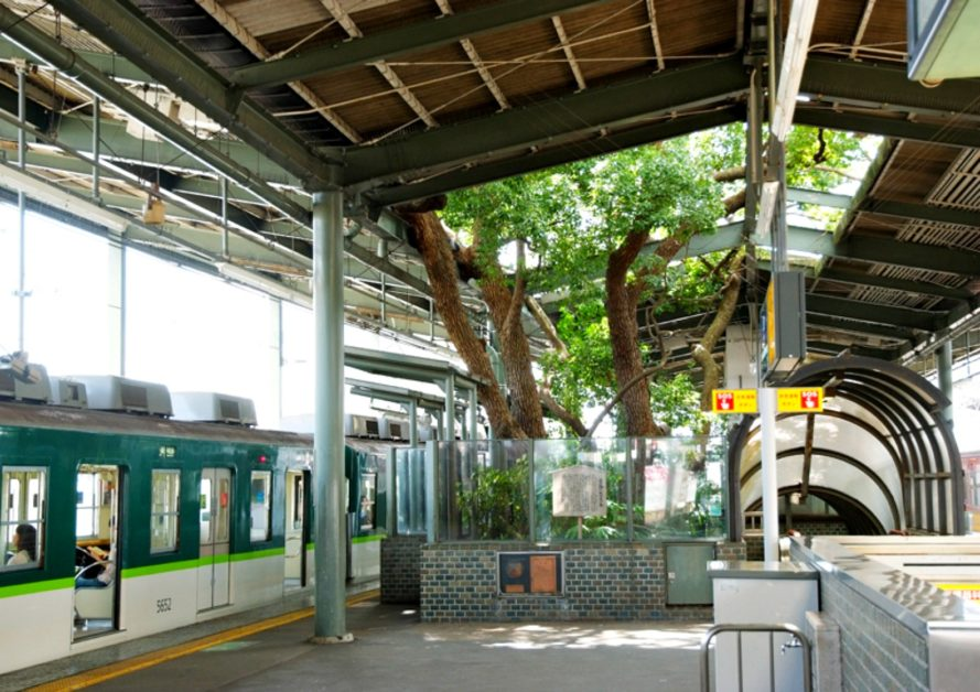 Big Kusu Tree of Kayashima, Japanese train station, Kayashima Station, Neyagawa train station, Kayashima Train Station, Kayashima Train Station Tree, nature-inspired design, green roofs train stations, green design, sustainable design