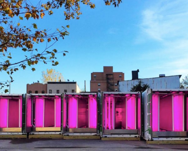 shipping container farm, tobias peggs, square roots, brooklyn farm