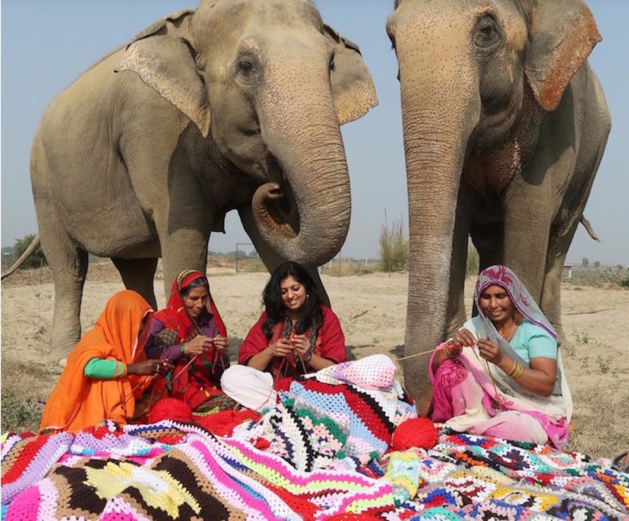 Wildlife SOS, clothing, clothing for elephants, elephant sweaters