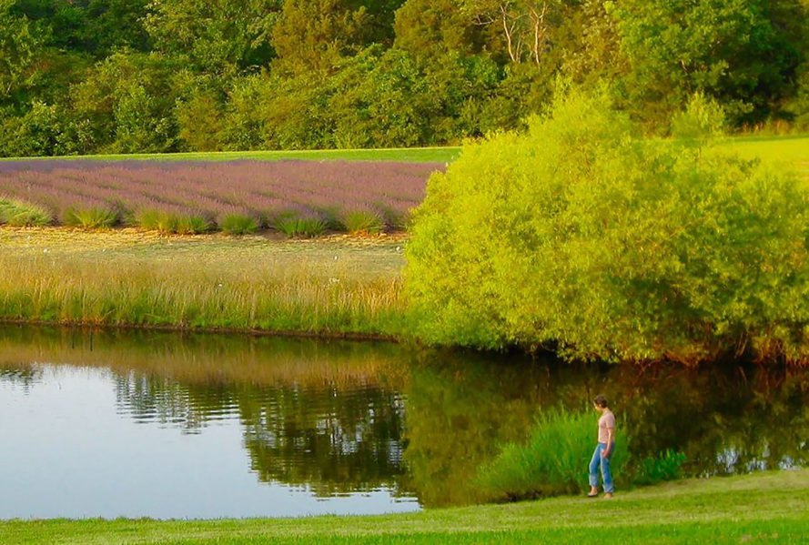 Bluebird Hill Farm, North Carolina, Norma Burns, farm, organic farm, organic farming, farming, farmer, farmers, essay, essay contest, organic, organic food, pond, Evening Pond